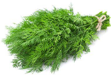 Зелень для салата оливье. Какие приправы и травы добавляют в оливье